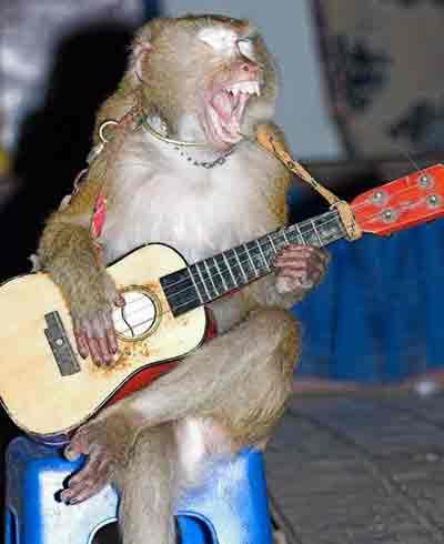 guitartechplease.jpg